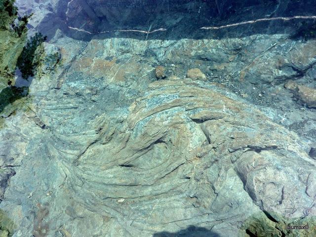 Fossile di Ittiosauro - pochi km a nord di Digne LB