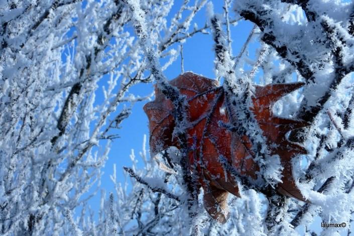 Ed infine l'inverno catturò l'autunno... Cameri - Piemont - Italy