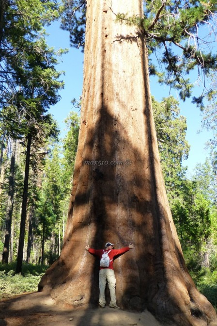 Sequoie - Yosemite