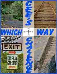 Which-Way-Banner1