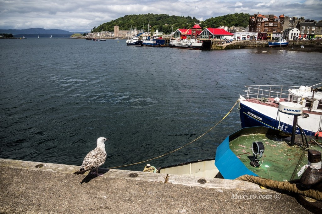 the seagull of Oban