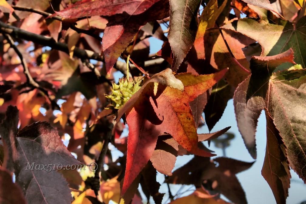 autunno pungente
