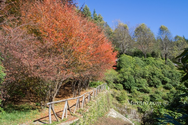 Oasi Zegna - Conca dei Rododendri