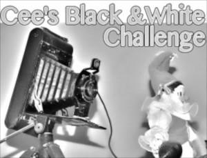 Cee B&W Challenge