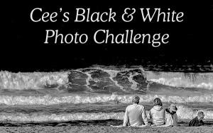Cee's Black & White