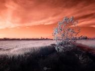 Landscape Infrared